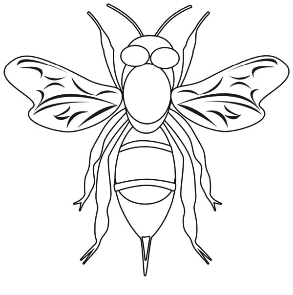 Honey Bee, : How to Draw Honey Bee Coloring Pages