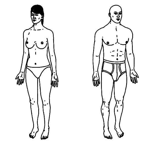 Human Body, : Human Body Anatomy Coloring Pages