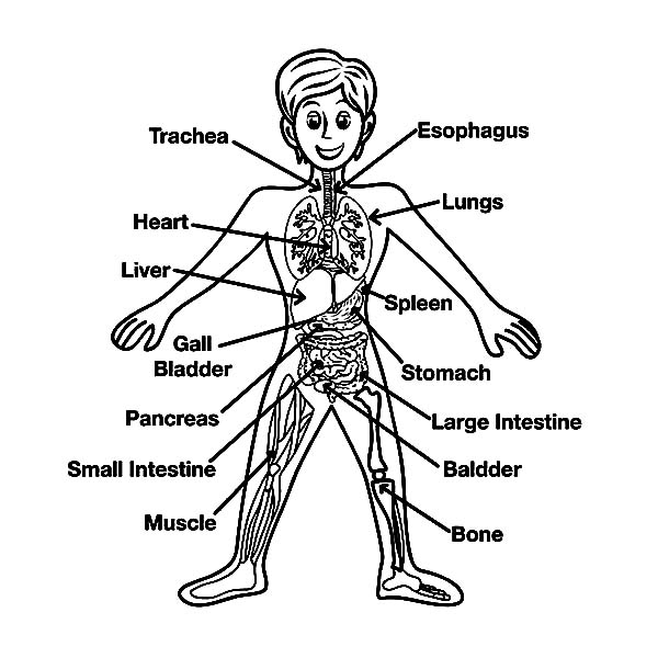 Human Body, : Human Body Parts Coloring Pages