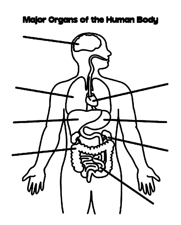 Human Body, : Major Organs of the Human Body Coloring Pages