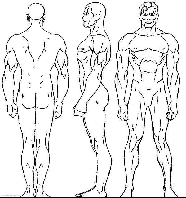 Human Body, : Male Human Body Coloring Pages