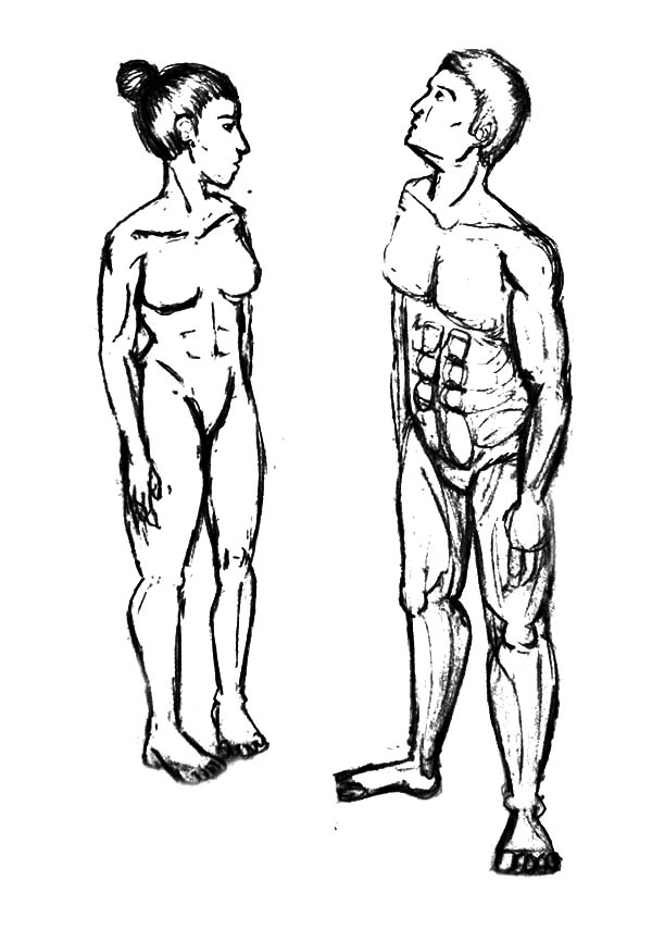 Human Body, : Male and Female Human Body Proportions Coloring Pages