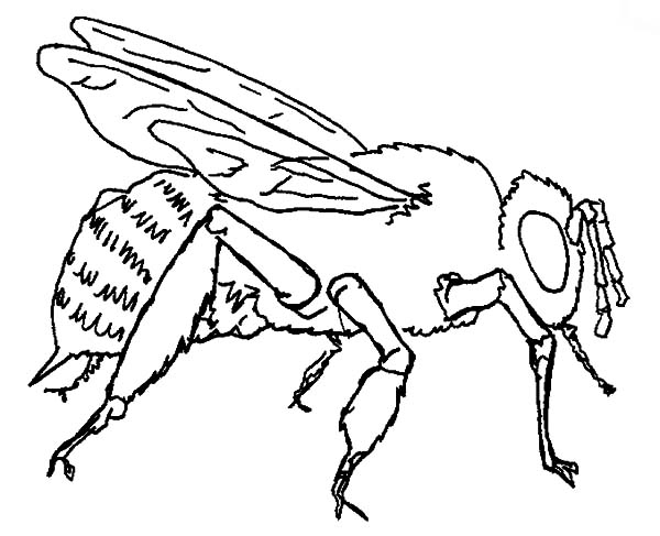 Mature Honey Bee Coloring Pages Coloring Sky