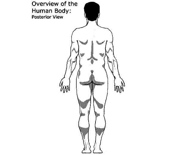 Human Body, : Overview of the Human Body Posterior Coloring Pages