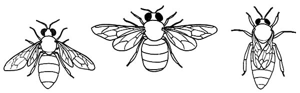 Honey Bee, : Type of Honey Bee Coloring Pages