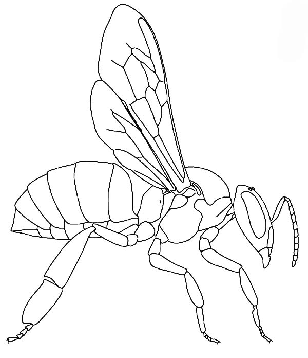 Honey Bee, : Worker Honey Bee Coloring Pages